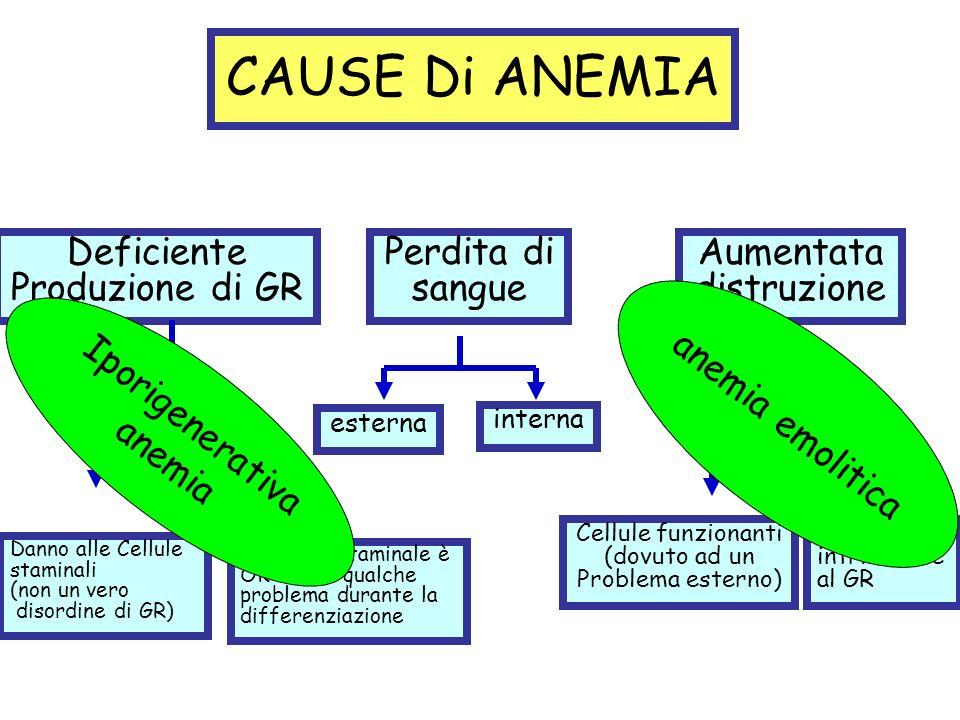 CAUSE Di ANEMIA Deficiente Produzione di GR Perdita di sangue Aumentata distruzione Danno alle Cellule staminali (non un vero disordine di GR) La cell
