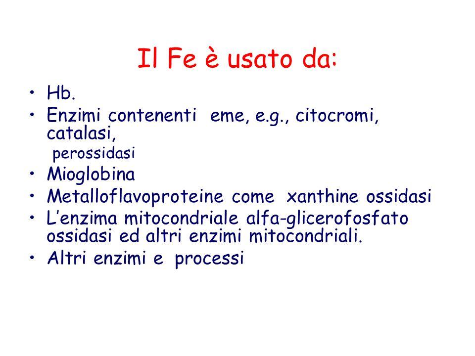 Il Fe è usato da: Hb. Enzimi contenenti eme, e.g., citocromi, catalasi, perossidasi Mioglobina Metalloflavoproteine come xanthine ossidasi Lenzima mit