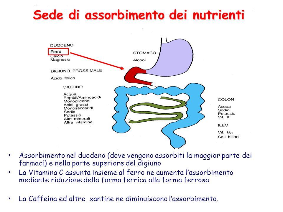 Sede di assorbimento dei nutrienti Assorbimento nel duodeno (dove vengono assorbiti la maggior parte dei farmaci) e nella parte superiore del digiuno