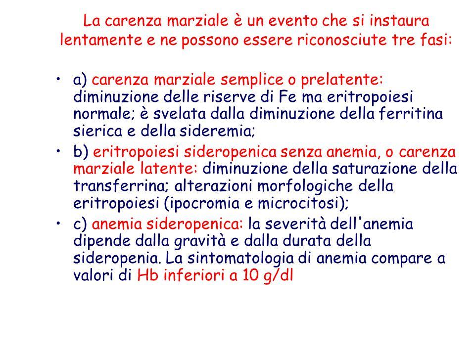 a) carenza marziale semplice o prelatente: diminuzione delle riserve di Fe ma eritropoiesi normale; è svelata dalla diminuzione della ferritina sieric