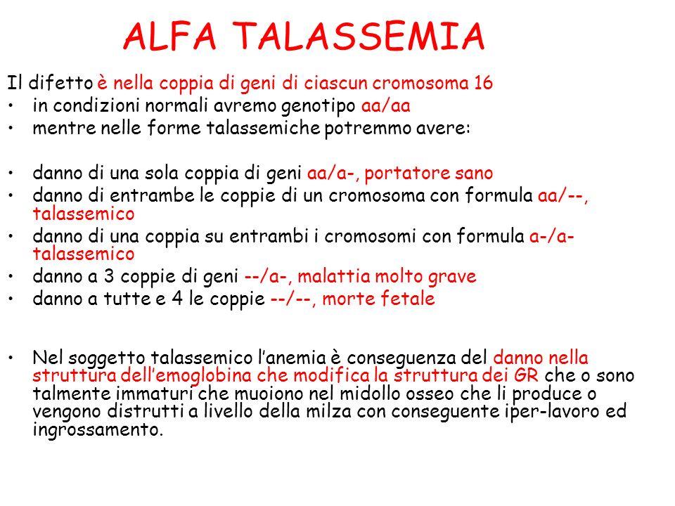 ALFA TALASSEMIA Il difetto è nella coppia di geni di ciascun cromosoma 16 in condizioni normali avremo genotipo aa/aa mentre nelle forme talassemiche potremmo avere: danno di una sola coppia di geni aa/a-, portatore sano danno di entrambe le coppie di un cromosoma con formula aa/--, talassemico danno di una coppia su entrambi i cromosomi con formula a-/a- talassemico danno a 3 coppie di geni --/a-, malattia molto grave danno a tutte e 4 le coppie --/--, morte fetale Nel soggetto talassemico lanemia è conseguenza del danno nella struttura dellemoglobina che modifica la struttura dei GR che o sono talmente immaturi che muoiono nel midollo osseo che li produce o vengono distrutti a livello della milza con conseguente iper-lavoro ed ingrossamento.