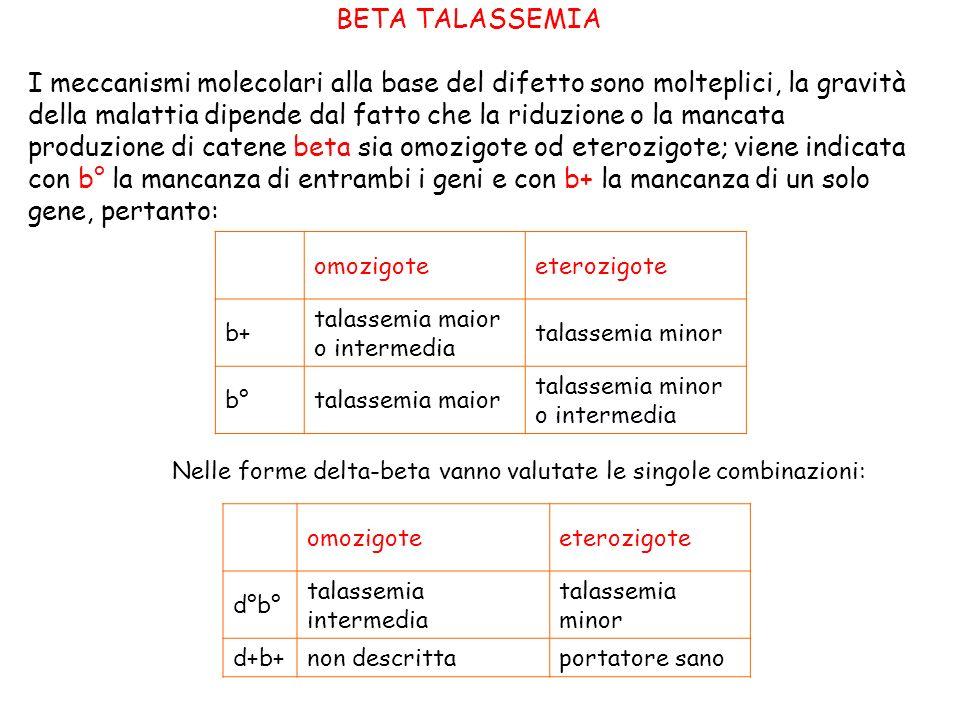 BETA TALASSEMIA I meccanismi molecolari alla base del difetto sono molteplici, la gravità della malattia dipende dal fatto che la riduzione o la mancata produzione di catene beta sia omozigote od eterozigote; viene indicata con b° la mancanza di entrambi i geni e con b+ la mancanza di un solo gene, pertanto: omozigoteeterozigote b+ talassemia maior o intermedia talassemia minor b°talassemia maior talassemia minor o intermedia Nelle forme delta-beta vanno valutate le singole combinazioni: omozigoteeterozigote d°b° talassemia intermedia talassemia minor d+b+non descrittaportatore sano