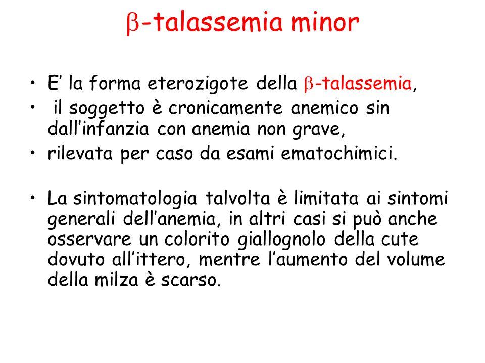 -talassemia minor E la forma eterozigote della -talassemia, il soggetto è cronicamente anemico sin dallinfanzia con anemia non grave, rilevata per caso da esami ematochimici.