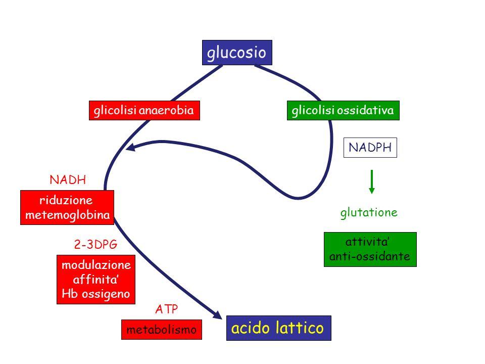 glucosio glicolisi anaerobiaglicolisi ossidativa NADPH attivita anti-ossidante glutatione NADH ATP 2-3DPG riduzione metemoglobina modulazione affinita Hb ossigeno metabolismo acido lattico