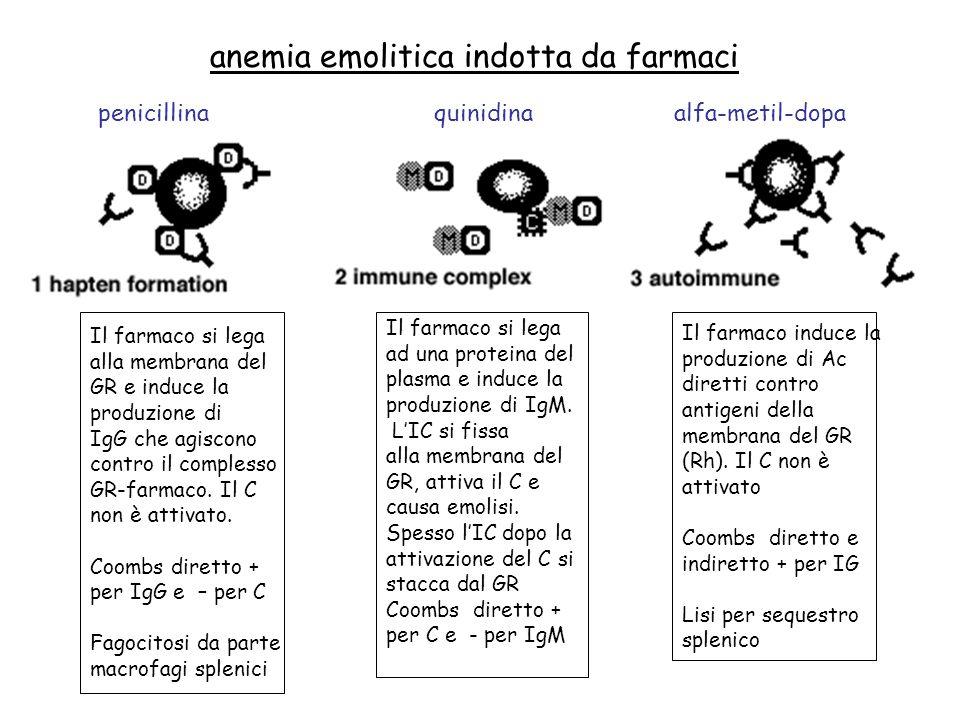 anemia emolitica indotta da farmaci penicillinaquinidinaalfa-metil-dopa Il farmaco si lega alla membrana del GR e induce la produzione di IgG che agiscono contro il complesso GR-farmaco.