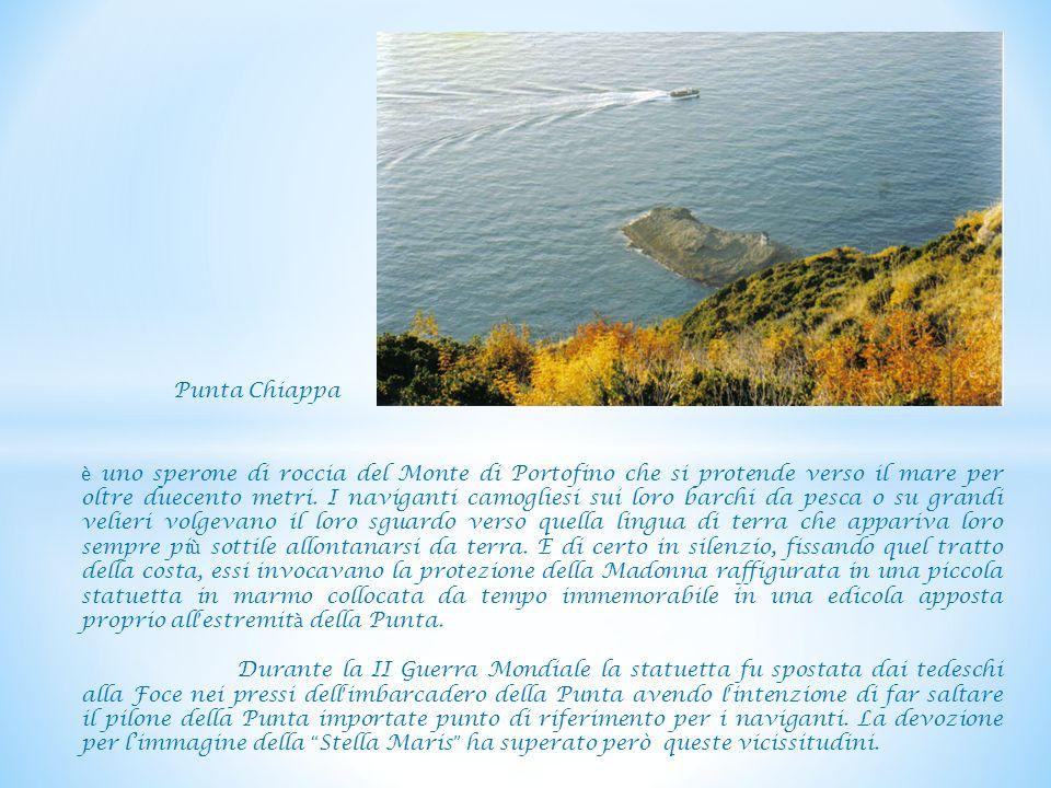 Punta Chiappa è uno sperone di roccia del Monte di Portofino che si protende verso il mare per oltre duecento metri.