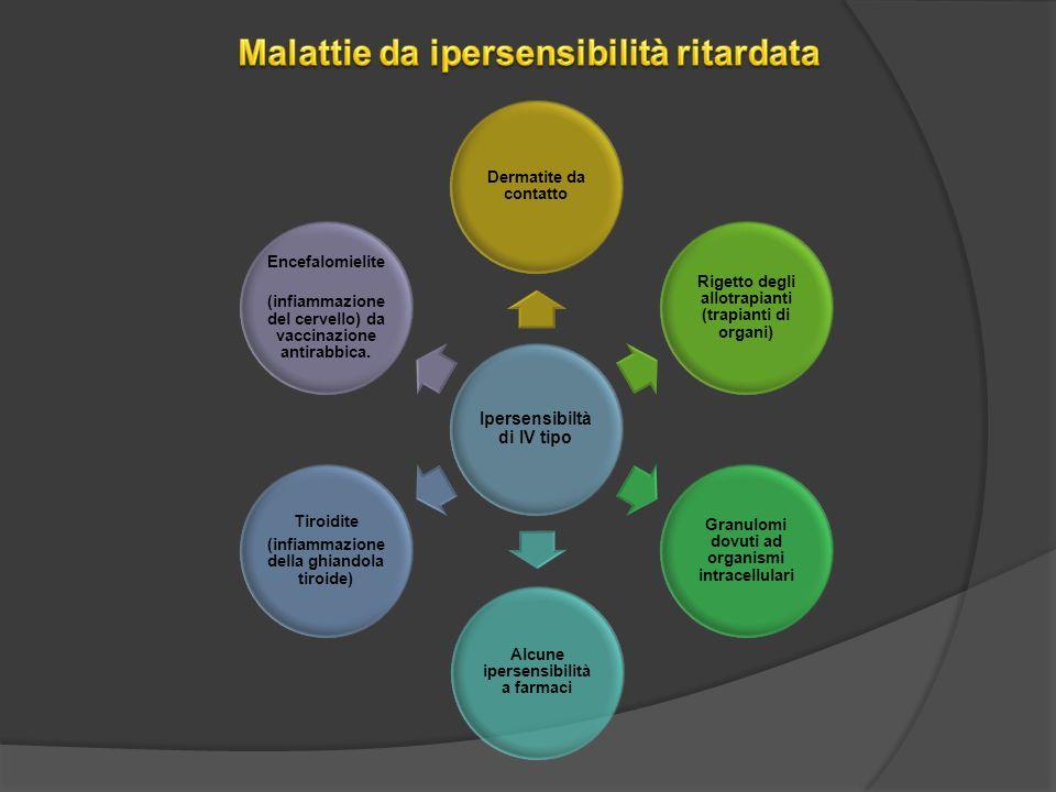 Ipersensibiltà di IV tipo Dermatite da contatto Rigetto degli allotrapianti (trapianti di organi) Granulomi dovuti ad organismi intracellulari Alcune