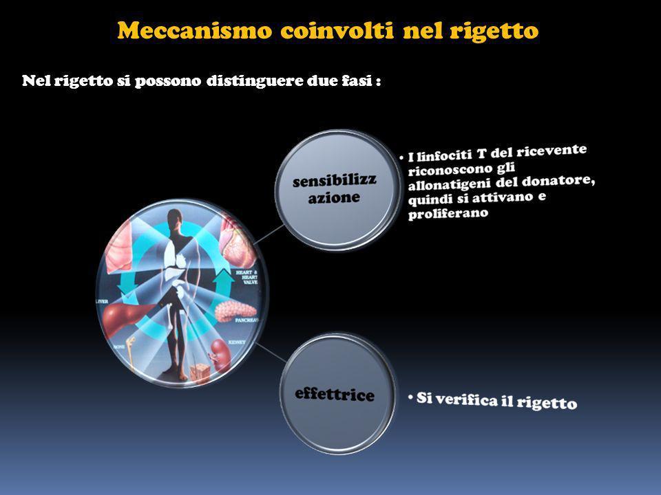 Meccanismo coinvolti nel rigetto Nel rigetto si possono distinguere due fasi :