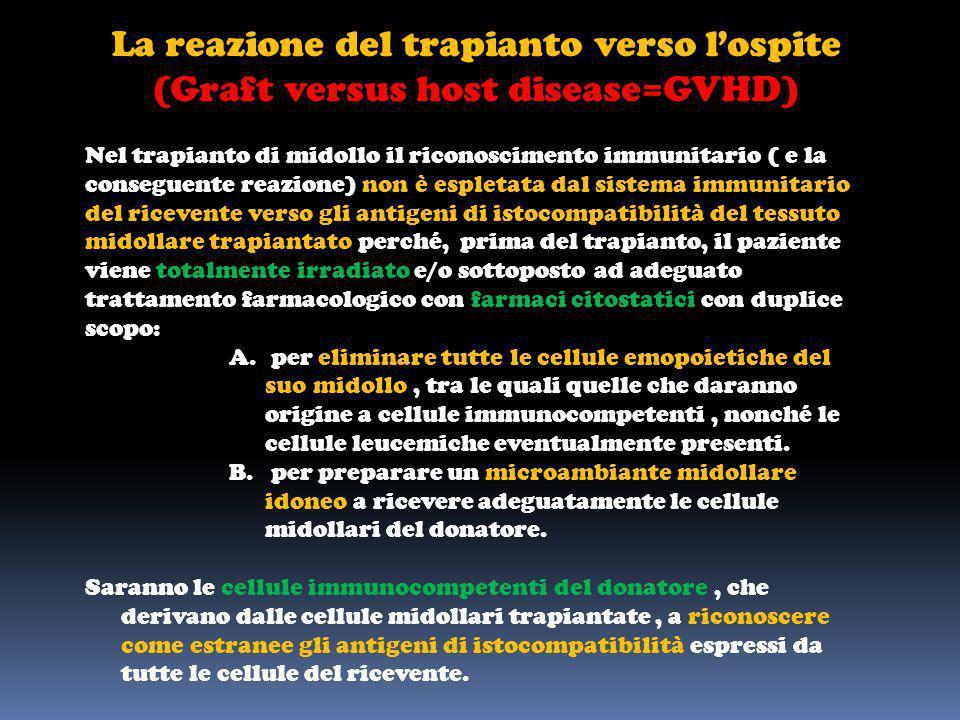 La reazione del trapianto verso lospite (Graft versus host disease=GVHD) Nel trapianto di midollo il riconoscimento immunitario ( e la conseguente rea