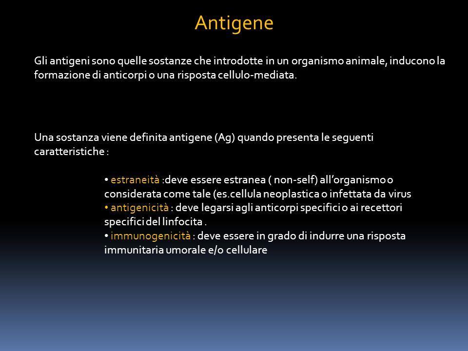 Gli antigeni possono essere : completi incompleti (detti apteni) Completi : possiedono tutte e tre le caratteristiche viene definito immunogeno è una macromolecola (peso molecolare rilevante) incompleti : è estraneo capace di legarsi ai recettori specifici (antigenico) non è in grado di stimolare una risposta immunitaria ( non immunogenico) presentano un basso peso molecolare diventa immunogenico quando si lega ( coniuga) ad una molecola proteica, definita carrier o sostanza vettore il coniugato aptene-carrier induce la produzione di anticorpi sia contro laptene sia contro il carrier