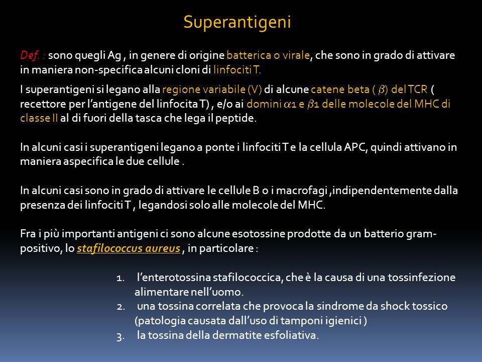Superantigeni Def. : sono quegli Ag, in genere di origine batterica o virale, che sono in grado di attivare in maniera non-specifica alcuni cloni di l