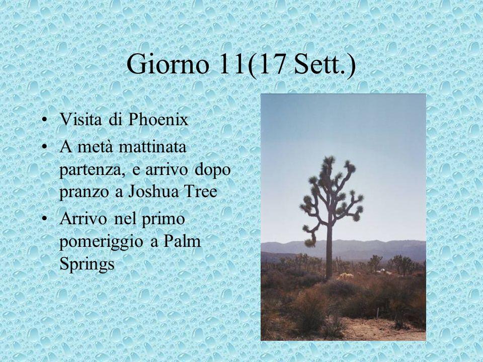 Giorno 11(17 Sett.) Visita di Phoenix A metà mattinata partenza, e arrivo dopo pranzo a Joshua Tree Arrivo nel primo pomeriggio a Palm Springs
