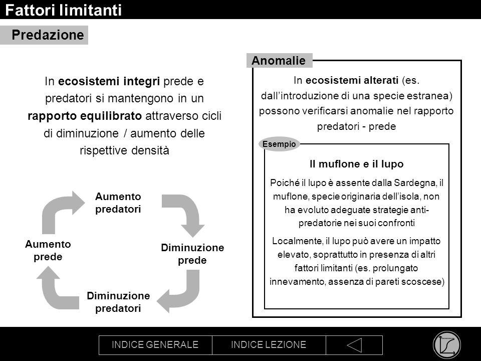 INDICE GENERALEINDICE LEZIONE Fattori limitanti Predazione In ecosistemi integri prede e predatori si mantengono in un rapporto equilibrato attraverso