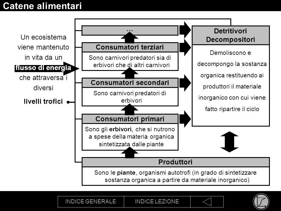 INDICE GENERALEINDICE LEZIONE Catene alimentari Le catene alimentari sono le vie di trasferimento dellenergia attraverso lecosistema Un esempio di catena alimentare
