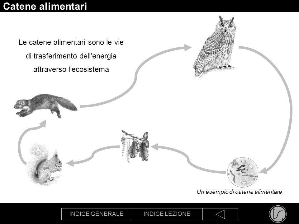 INDICE GENERALEINDICE LEZIONE Reti alimentari Le catene alimentari si combinano a formare delle reti più o meno complesse Un esempio di rete alimentare
