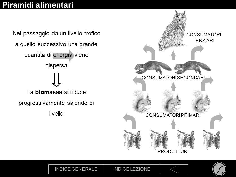 INDICE GENERALEINDICE LEZIONE Piramidi alimentari Nel passaggio da un livello trofico a quello successivo una grande quantità di energia viene dispers