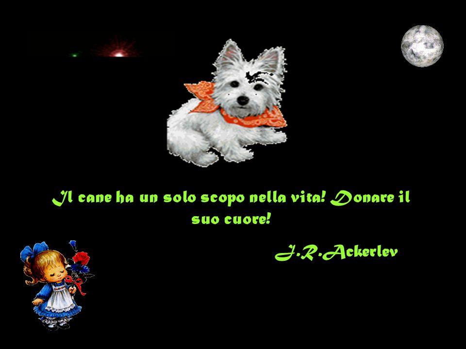 Il cane ha un solo scopo nella vita! Donare il suo cuore! J.R.Ackerlev