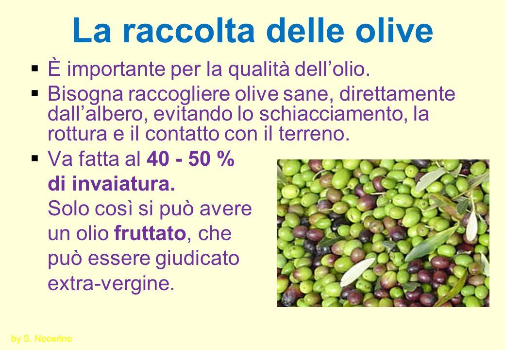 La raccolta delle olive È importante per la qualità dellolio. Bisogna raccogliere olive sane, direttamente dallalbero, evitando lo schiacciamento, la