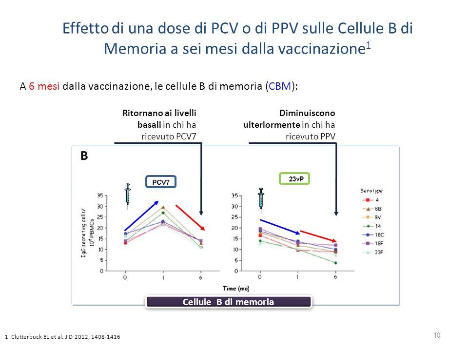 10 Cellule B di memoria Ritornano ai livelli basali in chi ha ricevuto PCV7 Diminuiscono ulteriormente in chi ha ricevuto PPV A 6 mesi dalla vaccinazi