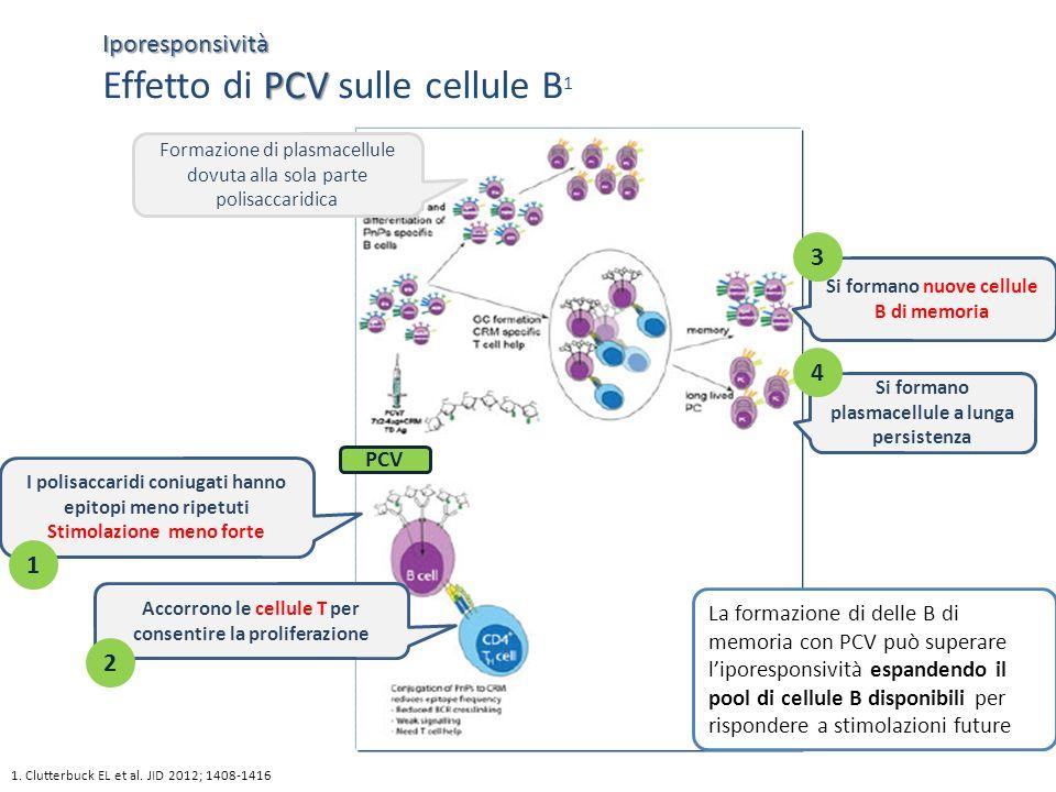 1. Clutterbuck EL et al. JID 2012; 1408-1416 Iporesponsività PCV Iporesponsività Effetto di PCV sulle cellule B 1 I polisaccaridi coniugati hanno epit