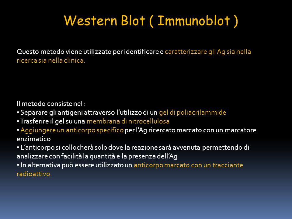 Western Blot ( Immunoblot ) Questo metodo viene utilizzato per identificare e caratterizzare gli Ag sia nella ricerca sia nella clinica. Il metodo con