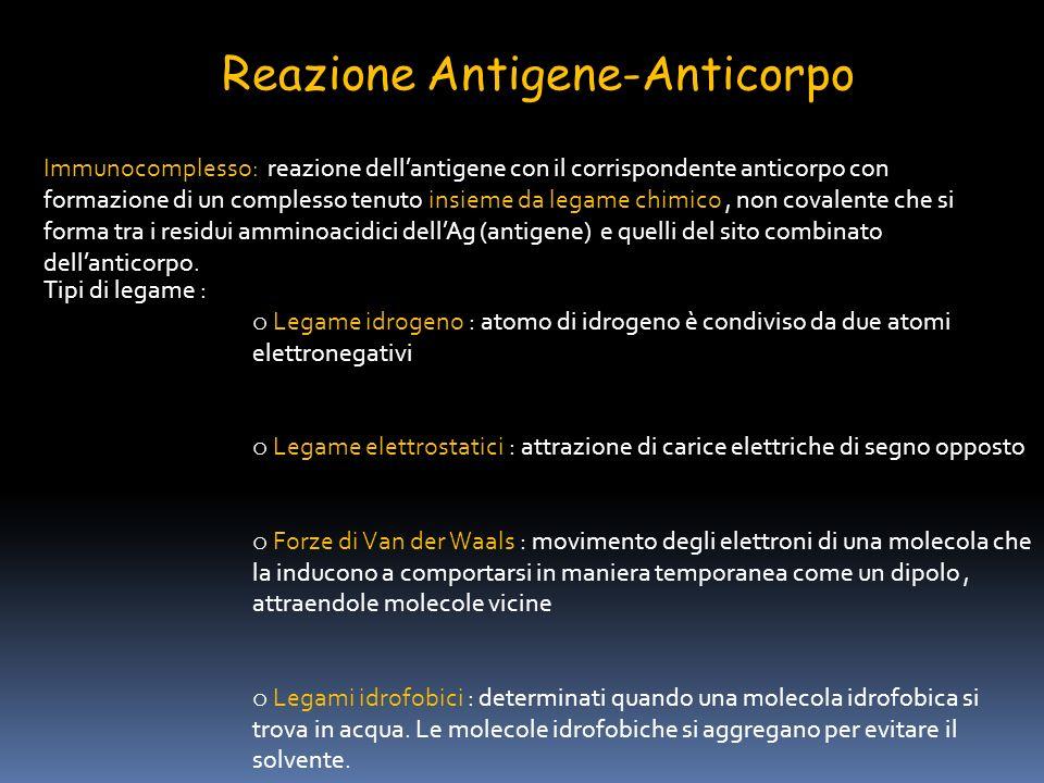 Reazione Antigene-Anticorpo Fattori che influenzano limmunocomplesso: Ph del mezzo forza ionica concentrazione dei due reagenti Affinita : somma algebrica delle forze attrattive e repulsive tra antigene ed anticorpo Avidità : insieme delle forze dinterazione tra i singoli siti combinatori dellanticorpo e lantigene