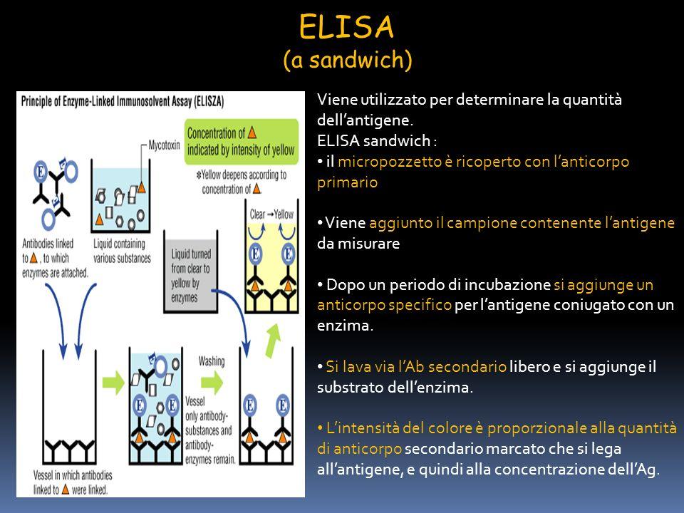 ELISA (a sandwich) Viene utilizzato per determinare la quantità dellantigene. ELISA sandwich : il micropozzetto è ricoperto con lanticorpo primario Vi