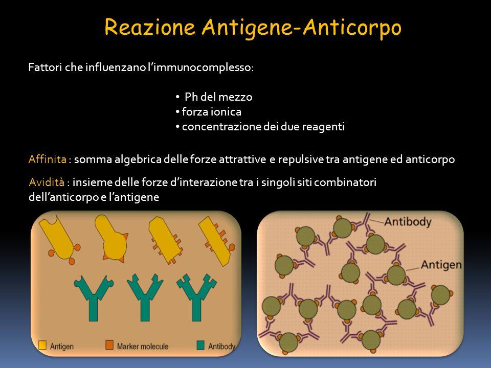 Reazione Antigene-Anticorpo Fattori che influenzano limmunocomplesso: Ph del mezzo forza ionica concentrazione dei due reagenti Affinita : somma algeb
