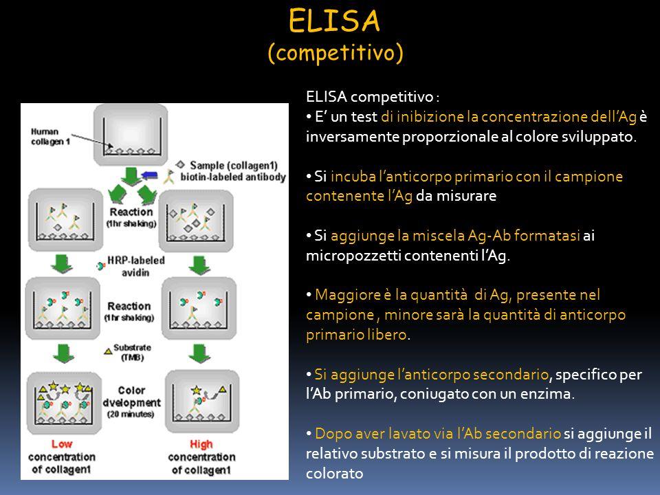 ELISA competitivo : E un test di inibizione la concentrazione dellAg è inversamente proporzionale al colore sviluppato. Si incuba lanticorpo primario