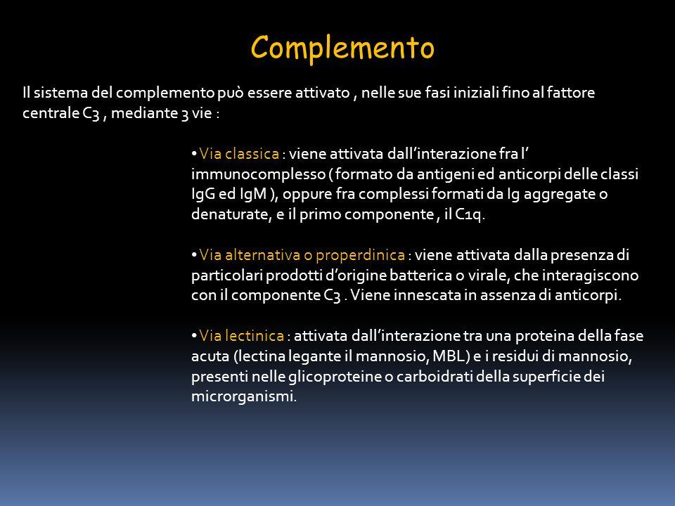 Complemento Il sistema del complemento può essere attivato, nelle sue fasi iniziali fino al fattore centrale C3, mediante 3 vie : Via classica : viene