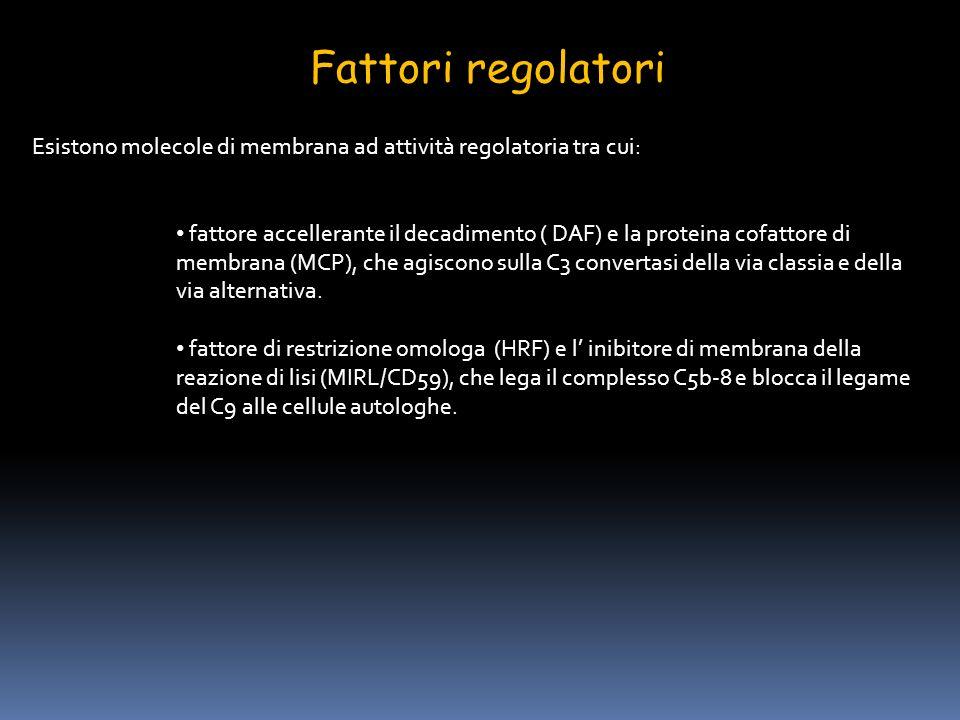 Fattori regolatori Esistono molecole di membrana ad attività regolatoria tra cui: fattore accellerante il decadimento ( DAF) e la proteina cofattore d