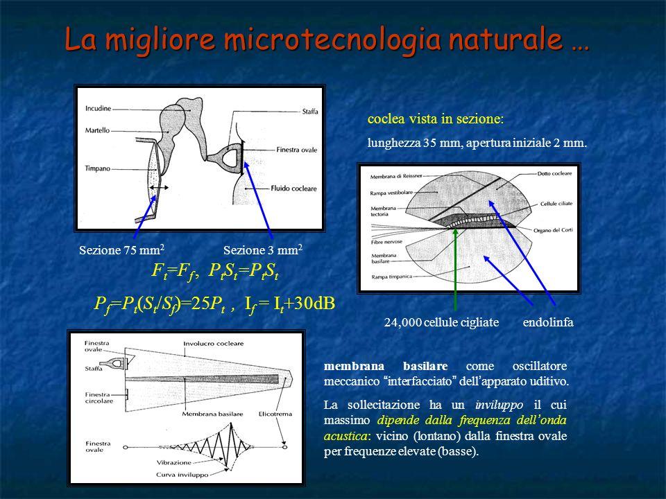 orecchio medio timpano, ossicini, finestra ovale: trasmissione delle vibrazioni meccaniche dallesterno allinterno; trasduzione meccanica amplificata (