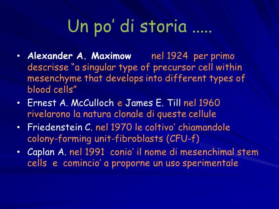 Un po di storia..... Alexander A. Maximow nel 1924 per primo descrisse a singular type of precursor cell within mesenchyme that develops into differen