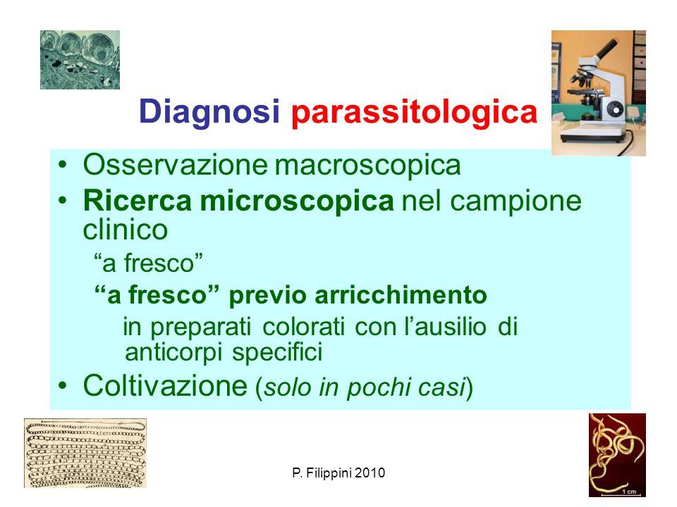 Diagnosi parassitologica Osservazione macroscopica Ricerca microscopica nel campione clinico a fresco a fresco previo arricchimento in preparati color