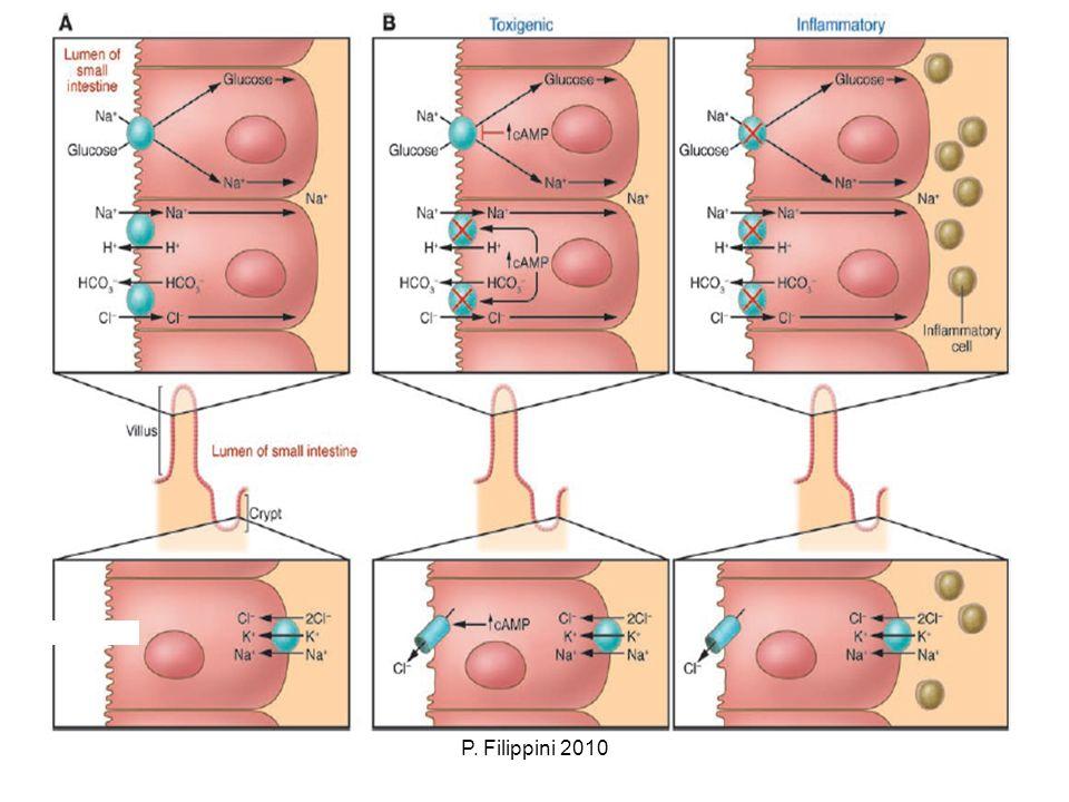 P.Filippini 2010 Algoritmo diagnostico nella diarrea.