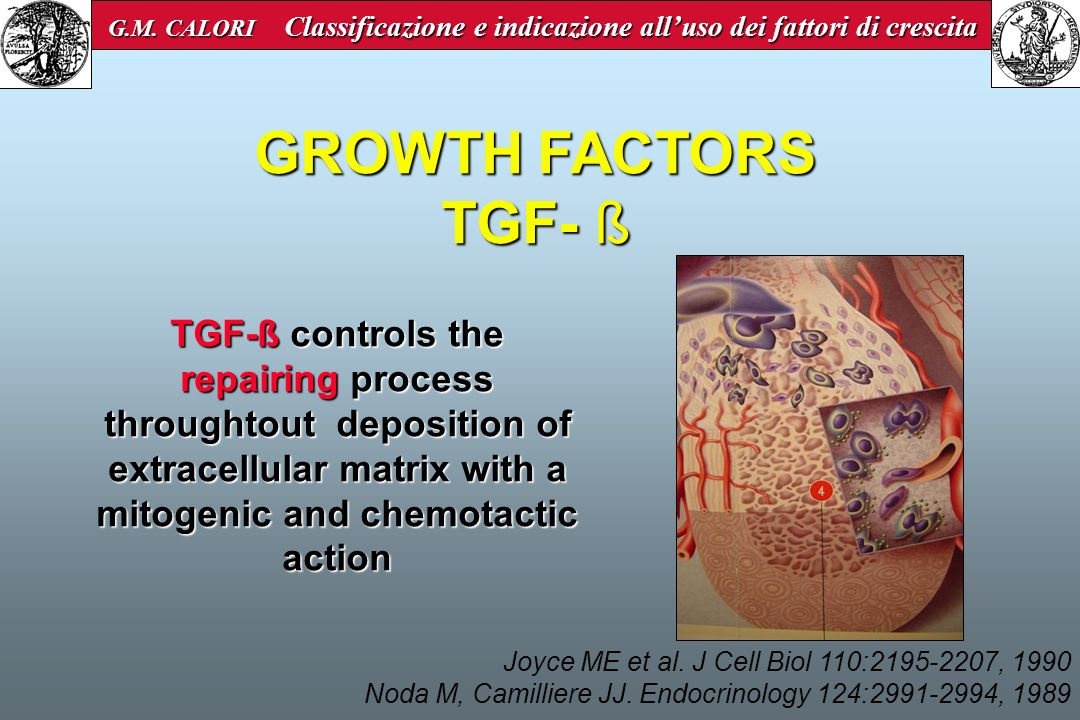 Concentration of TGF- ß in bone tissue and in platelets is 100 times greater than in the other tissues Joyce ME et al.