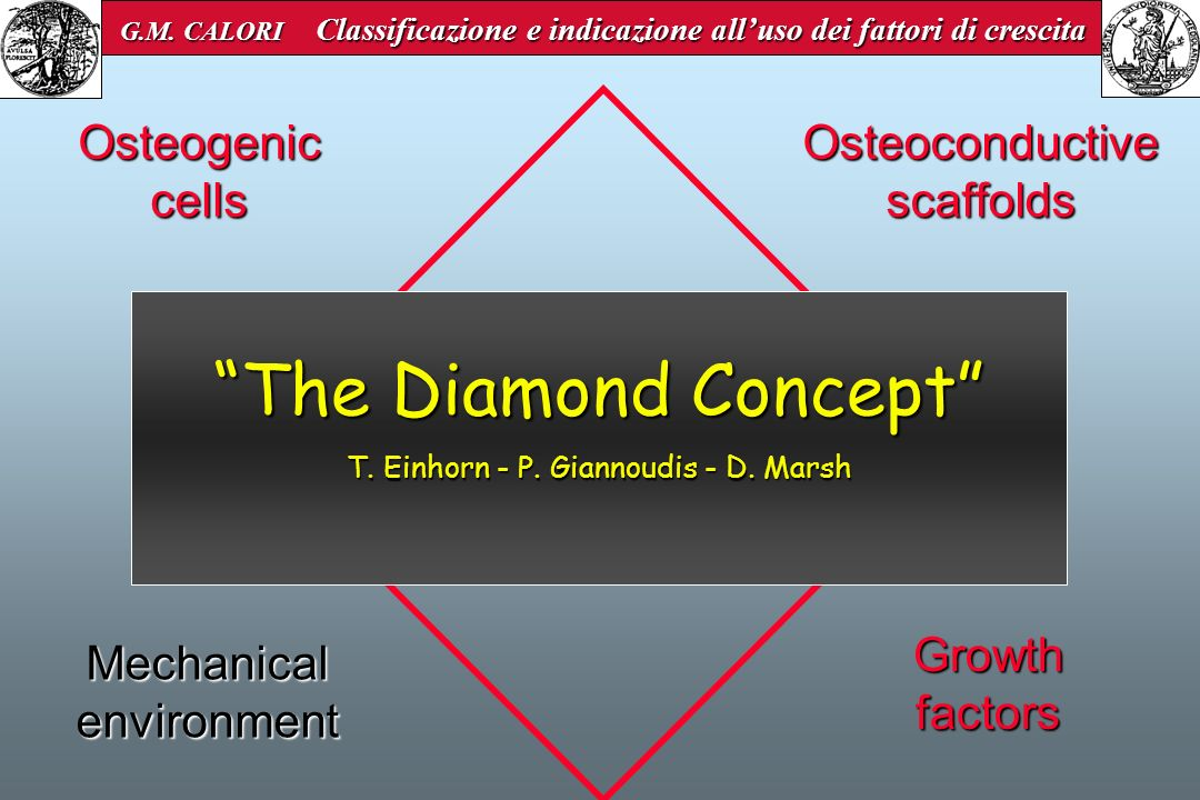 Osteogenic cells Osteoconductive scaffolds Growth factors Mechanical environment The Diamond Concept T. Einhorn - P. Giannoudis - D. Marsh G.M. CALORI