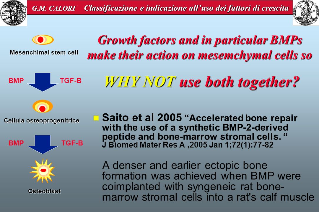 Saito et al 2005 Accelerated bone repair with the use of a synthetic BMP-2-derived peptide and bone-marrow stromal cells. J Biomed Mater Res A,2005 Ja