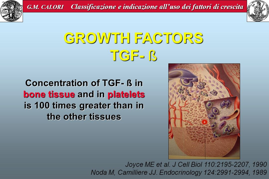 GROWTH FACTORS PDGF BMP-7 Osteonectin BDGF Collagen type I Vitamin D sialoprotein Osteocalcin Mesenchymal stem cell Osteo- progenitor cell Pre-osteoblastTransition- osteoblast Secreting osteoblast Osteozytic osteoblast Osteocyte IGF-I / IGF-II aFGF / bFGF TGF-B1 / TGF-B2 LIF BMP-2 / BMP-3 Growth Factors have a combined, sequencial and stadium-specific action G.M.