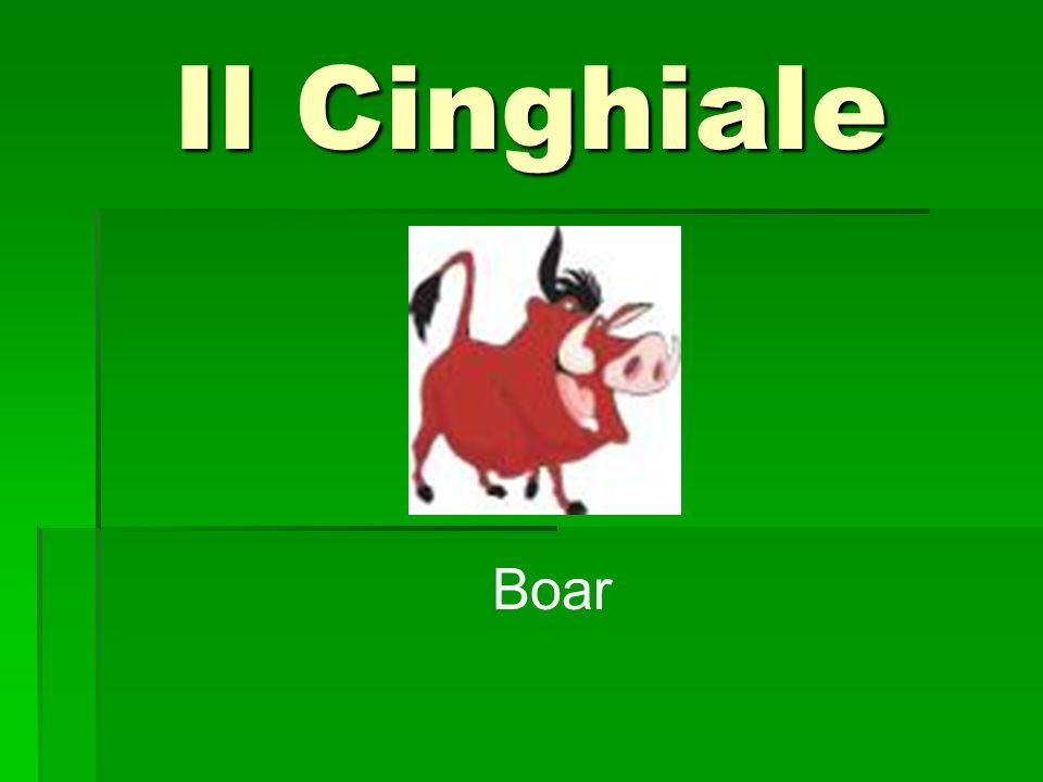 Il Cinghiale Boar