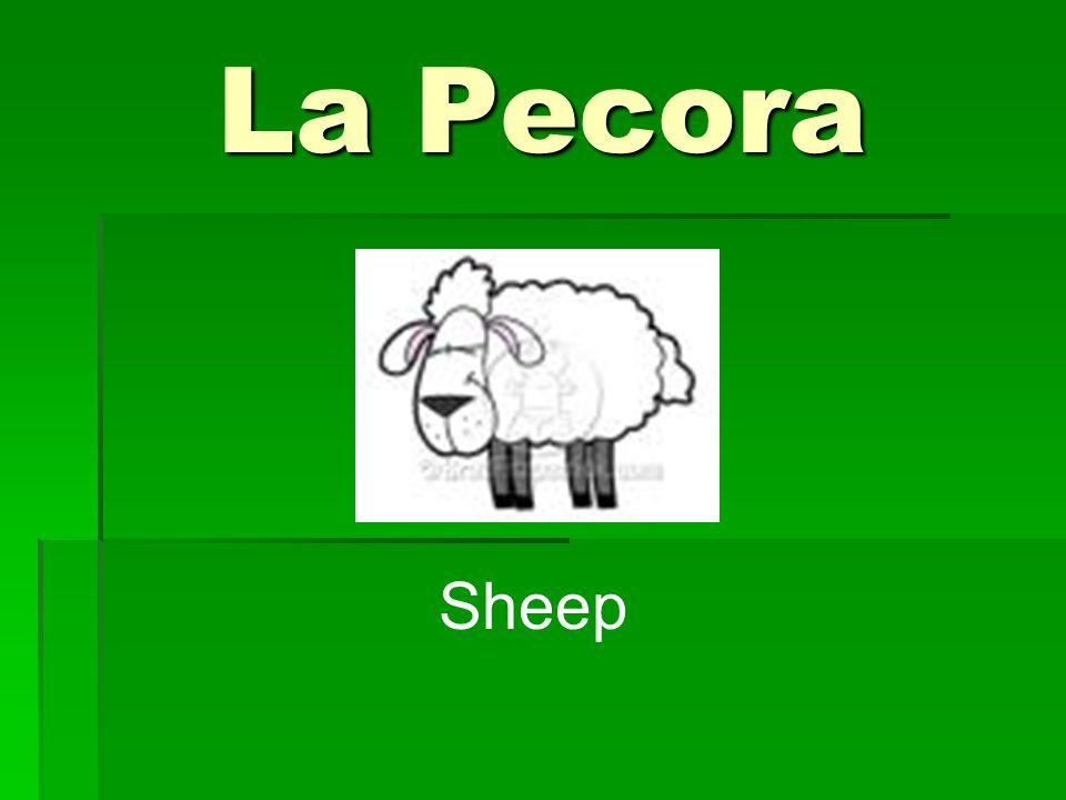 La Pecora Sheep