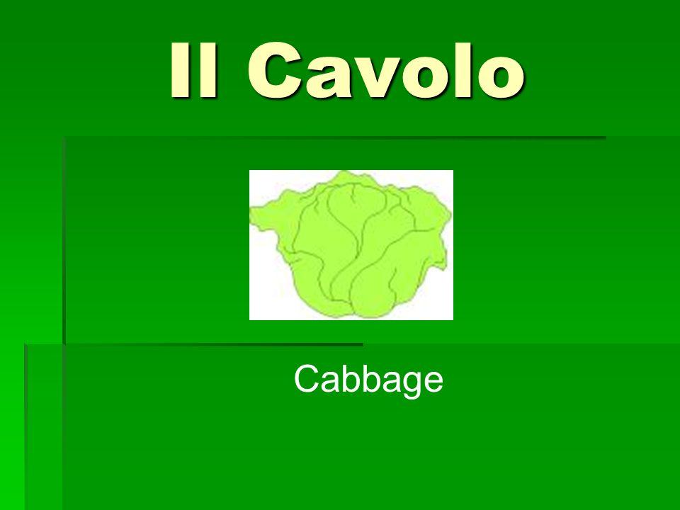 Il Cavolo Cabbage