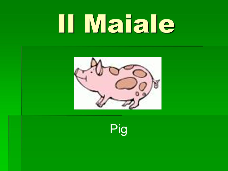 Il Maiale Pig