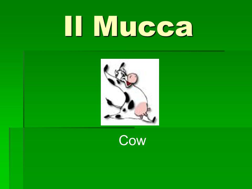 Il Mucca Cow
