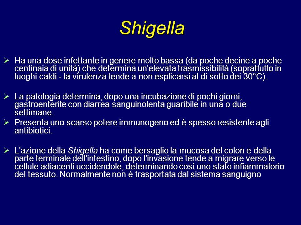 Shigella Ha una dose infettante in genere molto bassa (da poche decine a poche centinaia di unità) che determina un'elevata trasmissibilità (soprattut