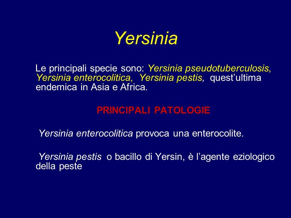 Yersinia Le principali specie sono: Yersinia pseudotuberculosis, Yersinia enterocolitica, Yersinia pestis, questultima endemica in Asia e Africa. PRIN