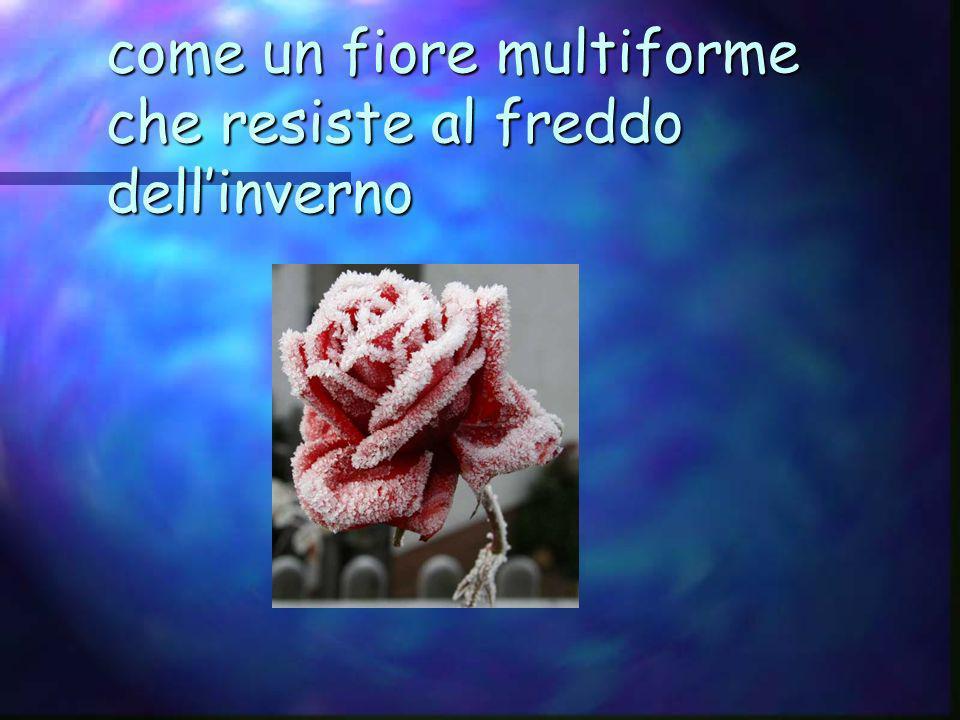 come un fiore multiforme che resiste al freddo dellinverno
