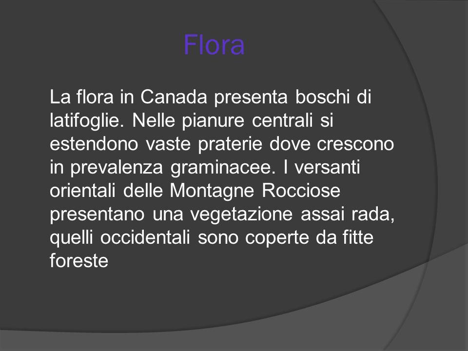 Flora La flora in Canada presenta boschi di latifoglie. Nelle pianure centrali si estendono vaste praterie dove crescono in prevalenza graminacee. I v