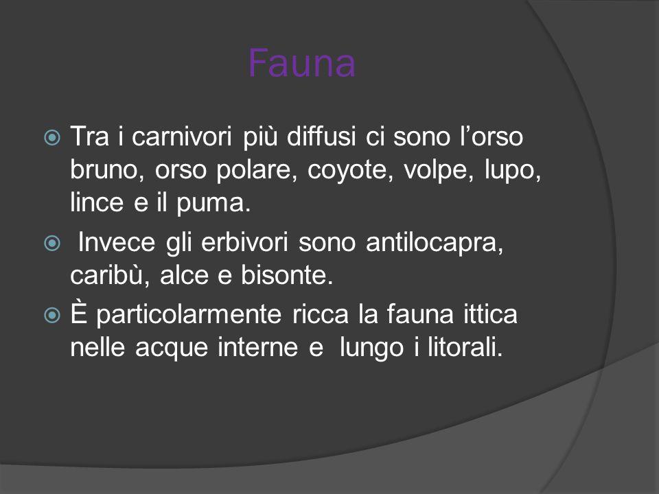 Fauna Tra i carnivori più diffusi ci sono lorso bruno, orso polare, coyote, volpe, lupo, lince e il puma. Invece gli erbivori sono antilocapra, caribù