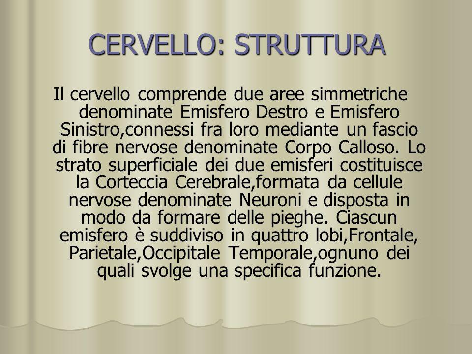 CERVELLO: STRUTTURA Il cervello comprende due aree simmetriche denominate Emisfero Destro e Emisfero Sinistro,connessi fra loro mediante un fascio di